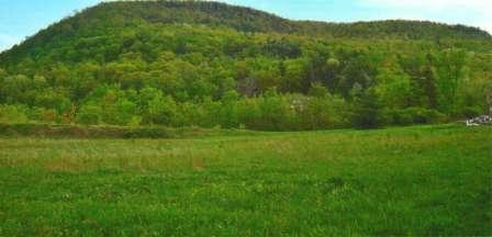 a grassy hill